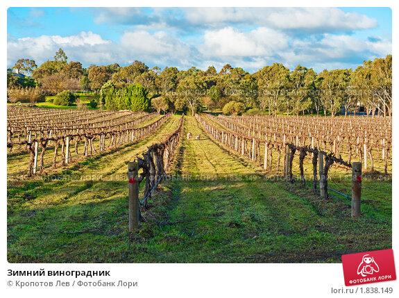 Купить «Зимний виноградник», фото № 1838149, снято 10 июля 2010 г. (c) Кропотов Лев / Фотобанк Лори