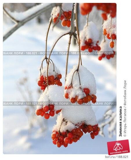 Зимняя калина, фото № 188021, снято 7 июля 2004 г. (c) Игорь Потапов / Фотобанк Лори