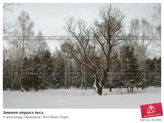 Зимняя опушка леса, эксклюзивное фото № 43093, снято 9 декабря 2016 г. (c) Александр Тараканов / Фотобанк Лори