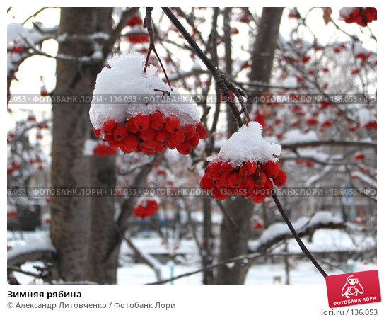 Купить «Зимняя рябина», фото № 136053, снято 23 ноября 2007 г. (c) Александр Литовченко / Фотобанк Лори