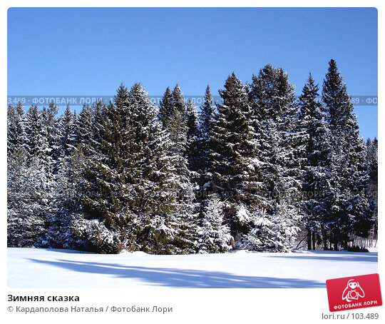 Зимняя сказка, фото № 103489, снято 24 мая 2017 г. (c) Кардаполова Наталья / Фотобанк Лори