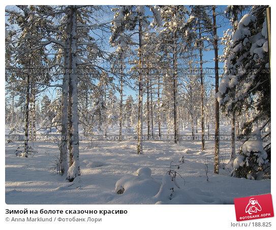 Зимой на болоте сказочно красиво, фото № 188825, снято 27 января 2008 г. (c) Anna Marklund / Фотобанк Лори