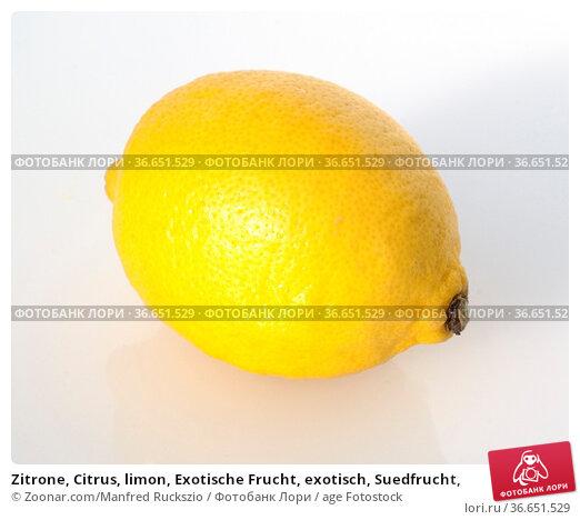 Zitrone, Citrus, limon, Exotische Frucht, exotisch, Suedfrucht, Стоковое фото, фотограф Zoonar.com/Manfred Ruckszio / age Fotostock / Фотобанк Лори