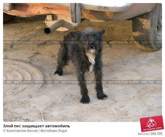 Злой пес защищает автомобиль, фото № 269705, снято 26 июля 2017 г. (c) Константин Босов / Фотобанк Лори