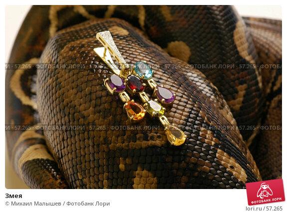 Змея, фото № 57265, снято 19 марта 2006 г. (c) Михаил Малышев / Фотобанк Лори