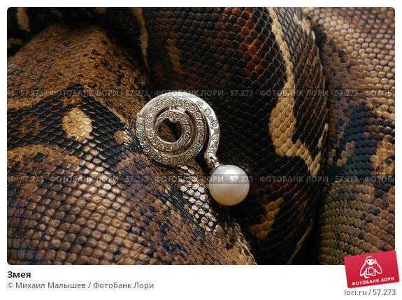 Змея, фото № 57273, снято 19 марта 2006 г. (c) Михаил Малышев / Фотобанк Лори