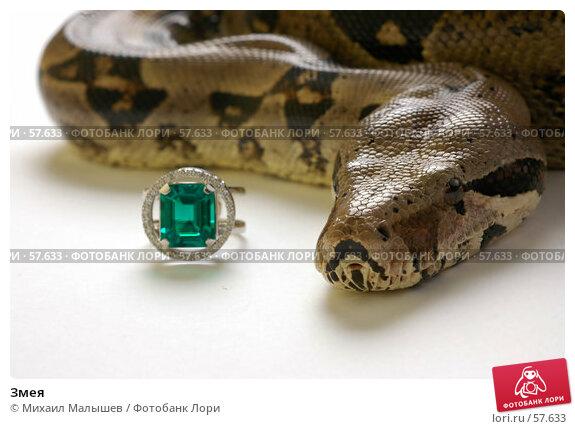 Купить «Змея», фото № 57633, снято 19 марта 2006 г. (c) Михаил Малышев / Фотобанк Лори
