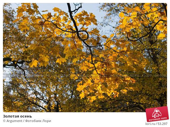 Купить «Золотая осень», фото № 53297, снято 12 октября 2006 г. (c) Argument / Фотобанк Лори