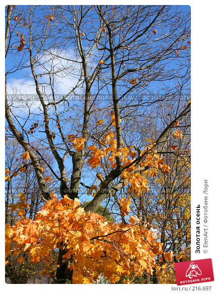 Золотая осень, фото № 216697, снято 21 июля 2017 г. (c) ElenArt / Фотобанк Лори