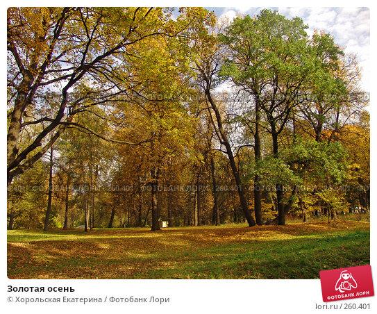 Купить «Золотая осень», фото № 260401, снято 28 сентября 2007 г. (c) Хорольская Екатерина / Фотобанк Лори