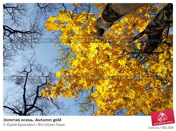 Купить «Золотая осень. Autumn gold», фото № 183309, снято 27 октября 2007 г. (c) Юрий Брыкайло / Фотобанк Лори