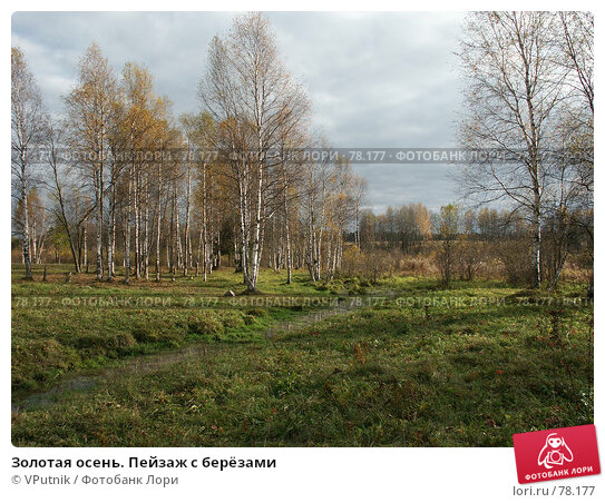 Купить «Золотая осень. Пейзаж с берёзами», фото № 78177, снято 8 октября 2005 г. (c) VPutnik / Фотобанк Лори