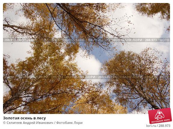 Золотая осень в лесу, фото № 288973, снято 1 октября 2006 г. (c) Селигеев Андрей Иванович / Фотобанк Лори