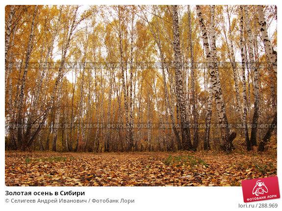 Золотая осень в Сибири, фото № 288969, снято 1 октября 2006 г. (c) Селигеев Андрей Иванович / Фотобанк Лори