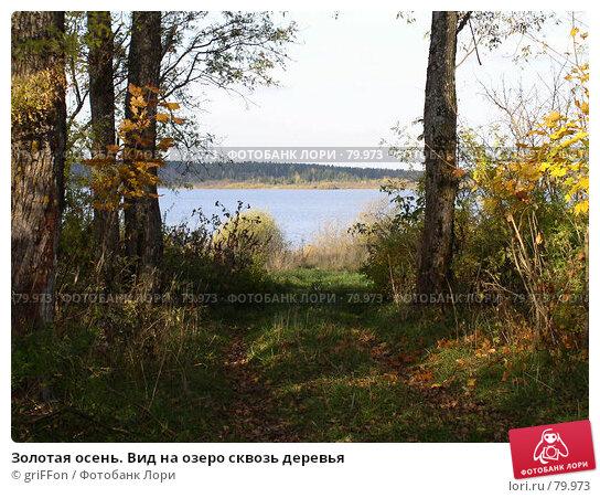 Золотая осень. Вид на озеро сквозь деревья, фото № 79973, снято 28 марта 2017 г. (c) griFFon / Фотобанк Лори