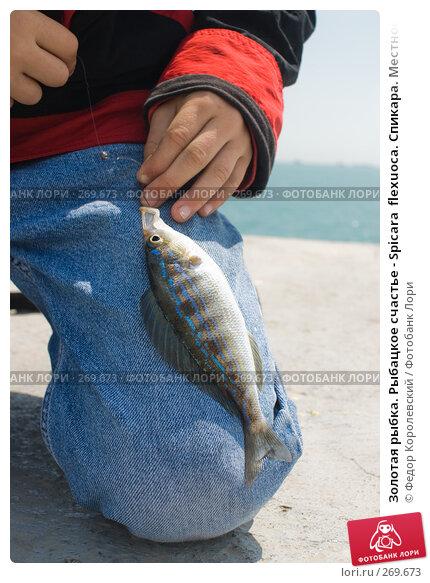 Золотая рыбка. Рыбацкое счастье - Spicara  flexuoca. Спикара. Местное название бобырь, или синий окунь, фото № 269673, снято 1 мая 2008 г. (c) Федор Королевский / Фотобанк Лори