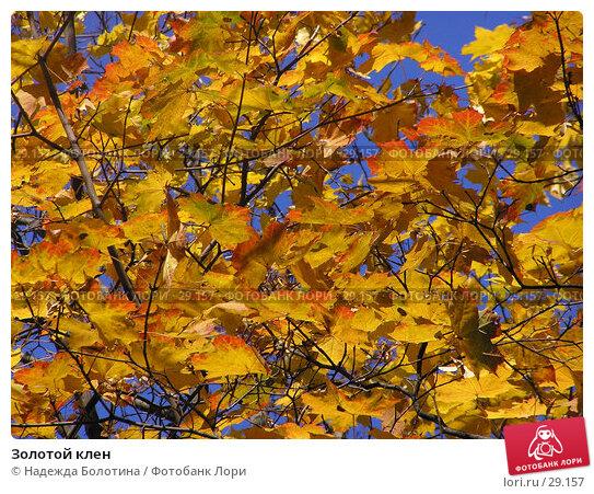 Золотой клен, фото № 29157, снято 19 октября 2005 г. (c) Надежда Болотина / Фотобанк Лори