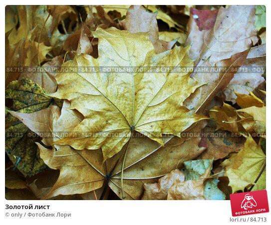 Золотой лист, фото № 84713, снято 10 ноября 2005 г. (c) only / Фотобанк Лори