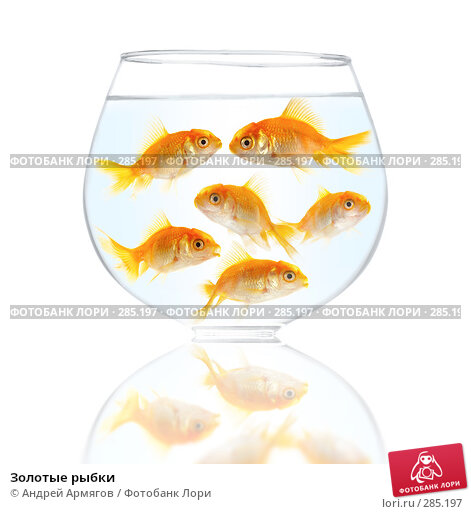 Золотые рыбки, фото № 285197, снято 24 октября 2016 г. (c) Андрей Армягов / Фотобанк Лори